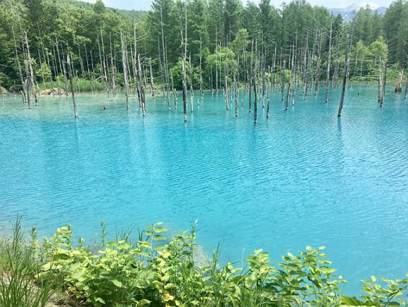 緑の葉と青い池
