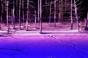 ライトアップされた青い池