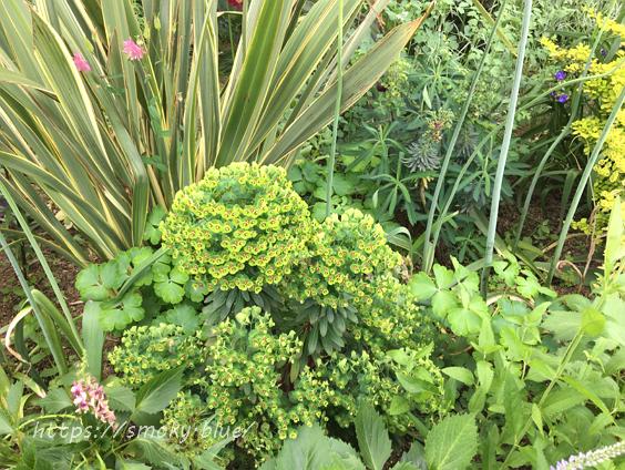みつけイングリッシュガーデンの植物